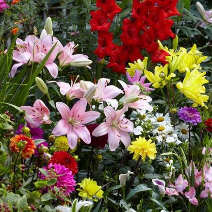 Flower bulbs sustainable gardening high country gardens spring planted flower bulbs 60 varieties mightylinksfo