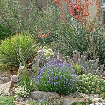 Desert Landscaping Plants Drought Tolerant Plants High Country
