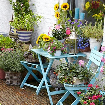Patio Plants For Container Gardens High Country Gardens