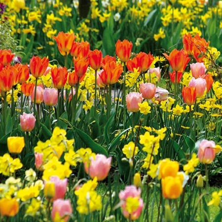 Flower bulbs sustainable gardening high country gardens fall planted flower bulbs mightylinksfo