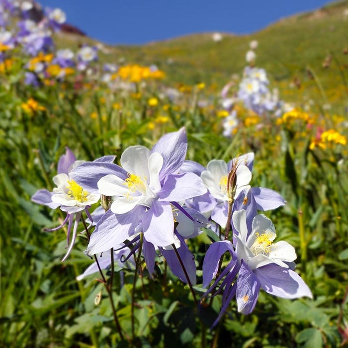 Image result for wildflower