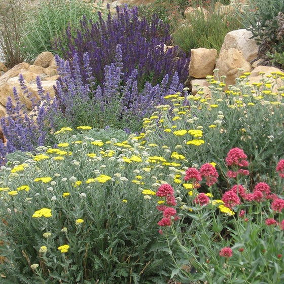 Jumbo Waterwise Pre Planned Garden High Country Gardens