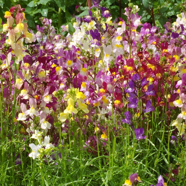 Butterfly and Hummingbird Wildflower Seed Mix