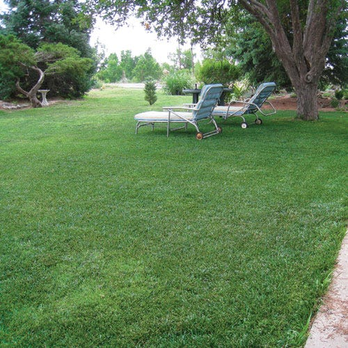 Low Work And Water Dwarf Fescue Gr Seed