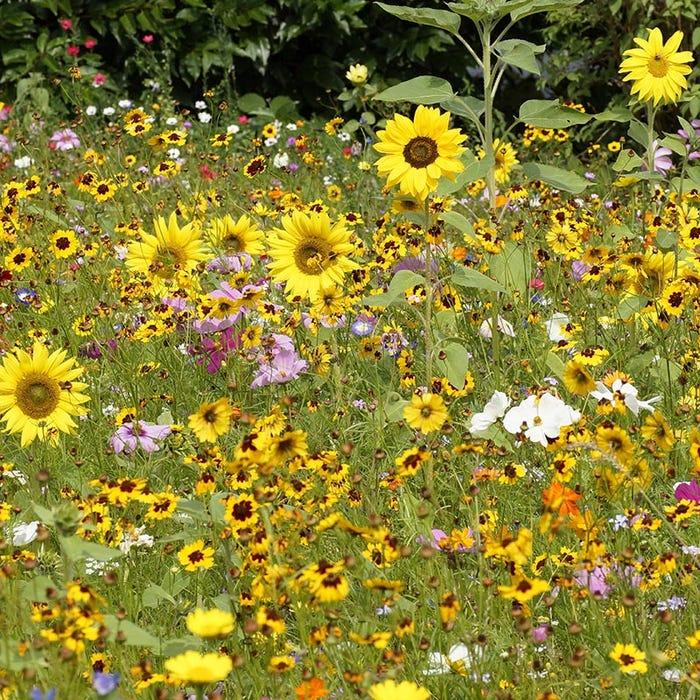 Pollinator Wildflower Seed Mix