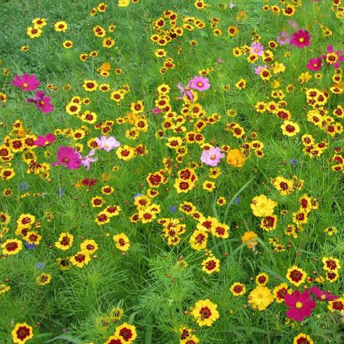 NATIVE 100/% MIX TO ATTRACT POLLINATORS Bees /& Butterflies Wildflower Seed