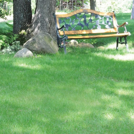 No Mow Lawn Grass Seed High Country Gardens