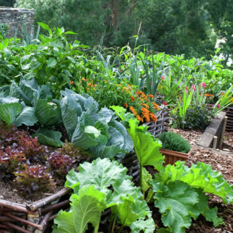 Growing Vegetables At Home A Practical And Philosophical Look At