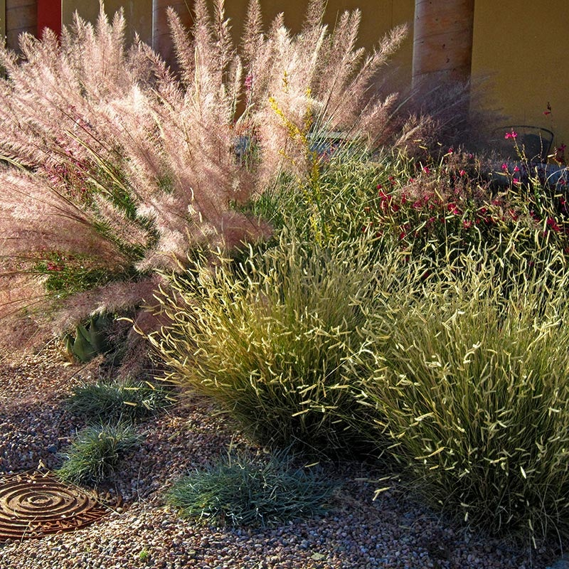 Masses Of Grass Planting Large Groupings Of Ornamental Grasses
