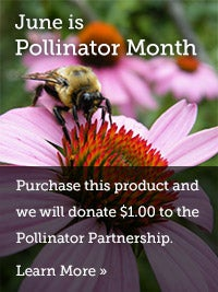 June is Pollinator Month