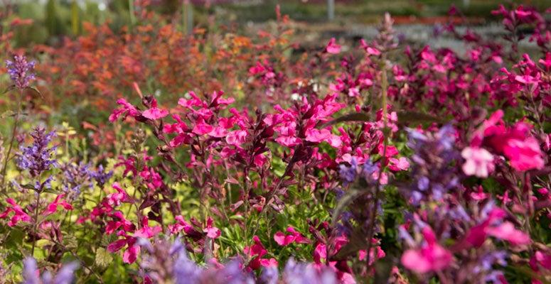 High country gardens pioneers in sustainable gardening mightylinksfo