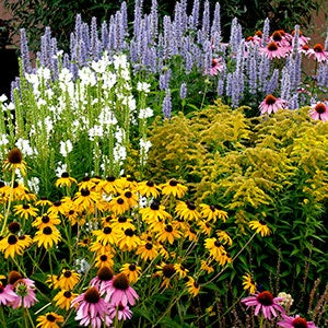 featured plants pre planned perennial gardens