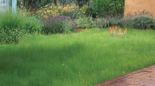 Native Grass Lawns