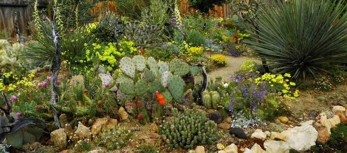 Cactus Garden Blog