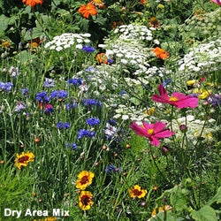 Dry area wildflower mix.
