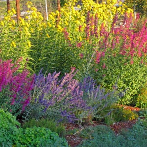 Xeriscape-Garden--September-CC-web