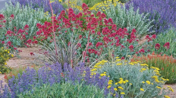 Easy Garden Design with our Summer Showstopper Pre-Planned Garden
