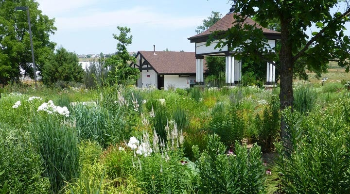 Rain_Garden_at_Chatfield_blog