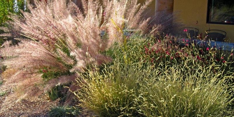 Ornamental Grasses For Fall Planting