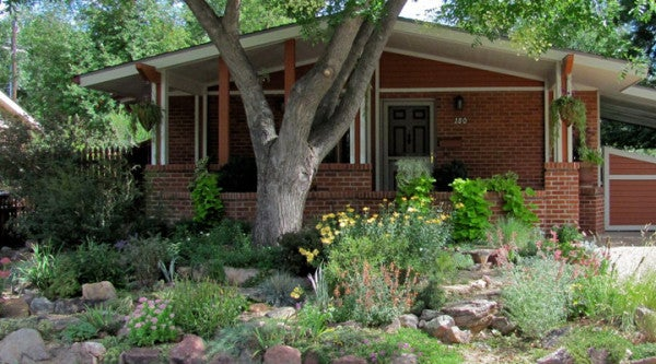 Native plants and drought resistant plants.