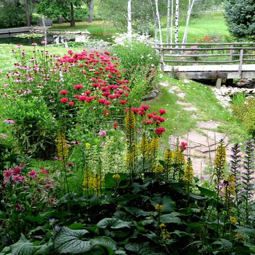 2015-7-21-View-of-upper-perennial-bed-and-pond_Larry-Griffin