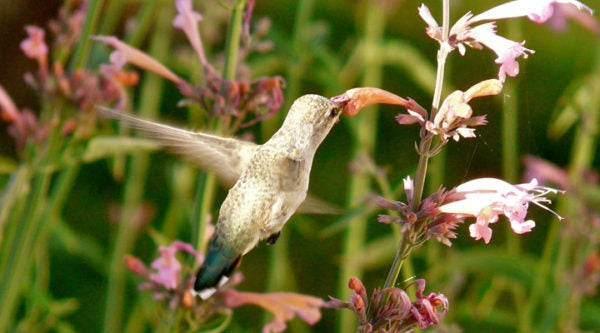 5 Tips for Attracting Hummingbirds To Your Garden