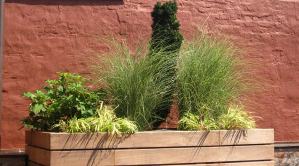 ornamental-grasses-Ellen-Zachos