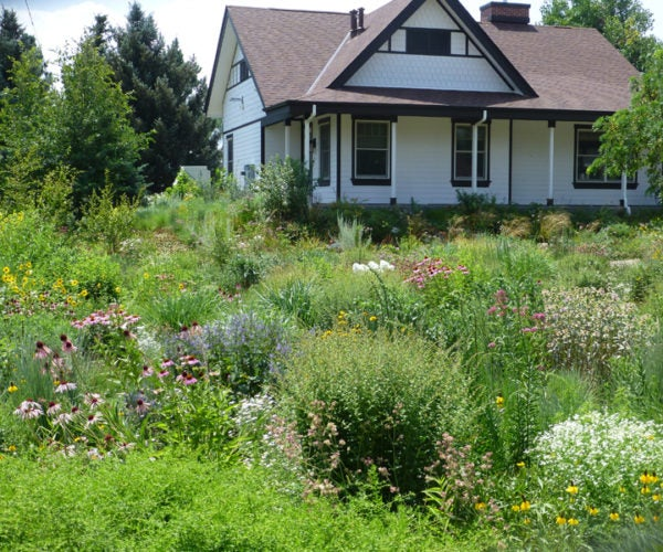 Rain Garden and offices at Chatfield Farms.