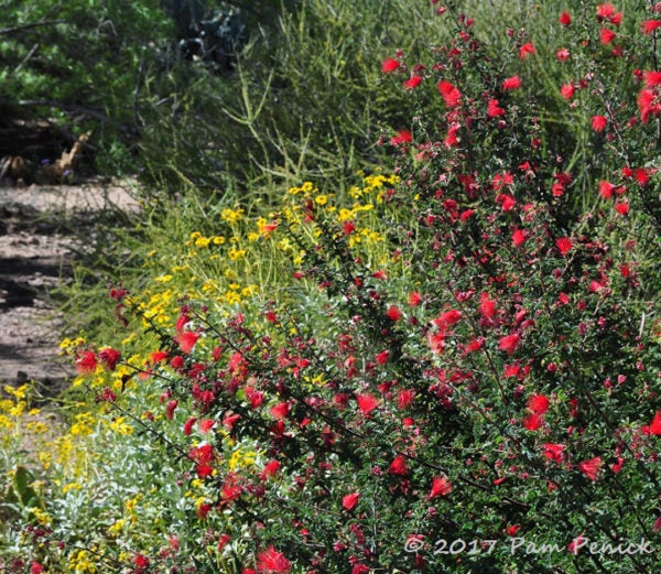 Fantastical Flora At Desert Botanical Garden In Phoenix
