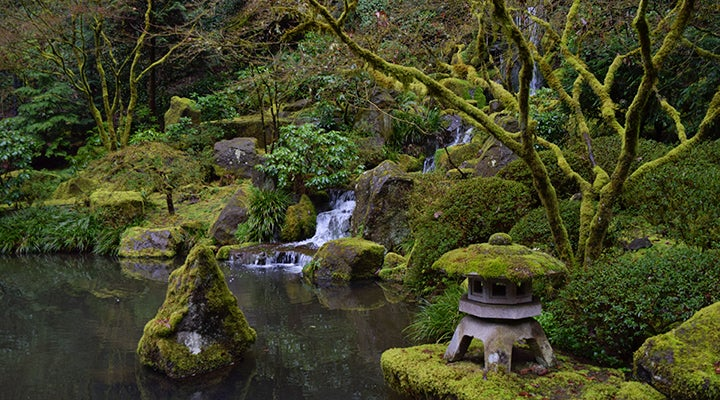 The Many Shades Of Green At Portland Japanese Gardens