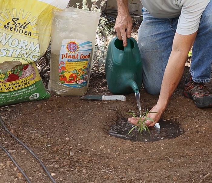 David Salman watering newly-planted perennials