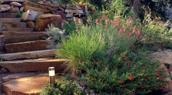 Micro-climates can be created by slopes, which require plants for well-drained areas. Shown here are Zauschneria, Ornamental Grass and Agastache.