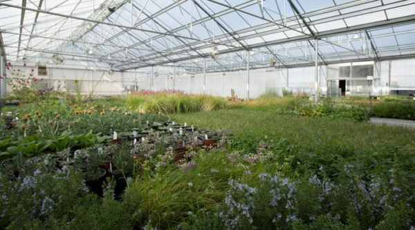 A greenhouse full of High Country Gardens' unique and native plants.