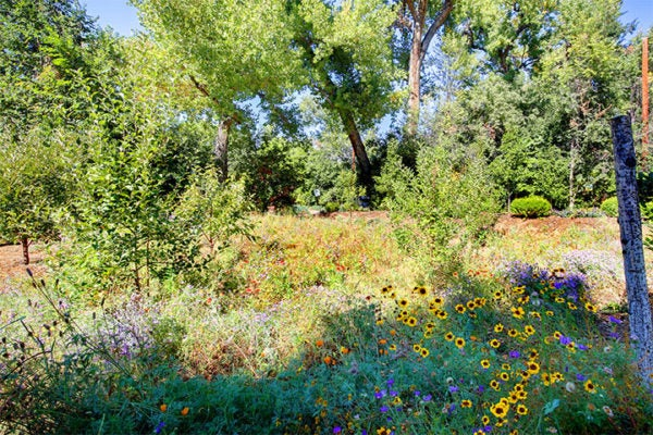 Habitat Hero Gold Award Winner 2017: Wildflower Meadow