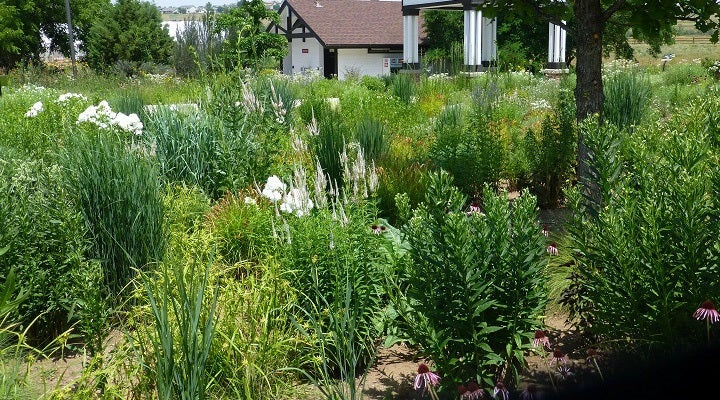Rain Garden at Chatfield