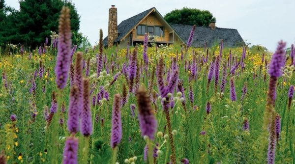 Sow seeds directly into the landscape to create a wildflower meadow.