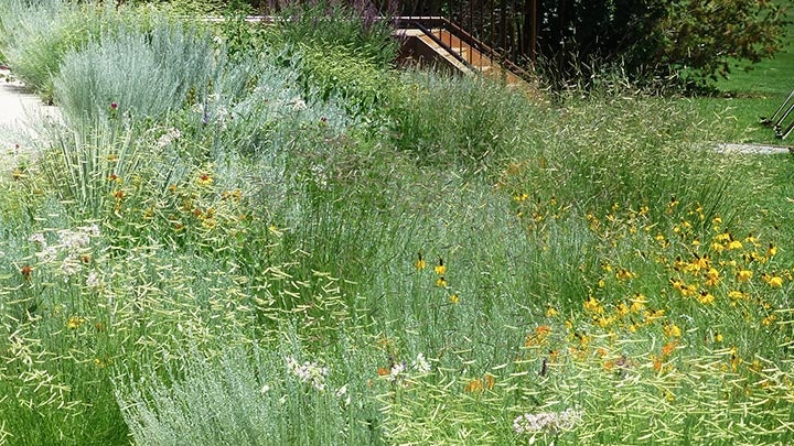 Chatfield Arboretum gardens abuzz with pollinators.
