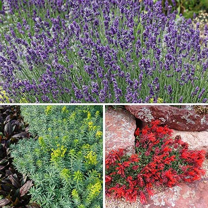 Four New Perennial Plant Collections Unique Problem Solvers