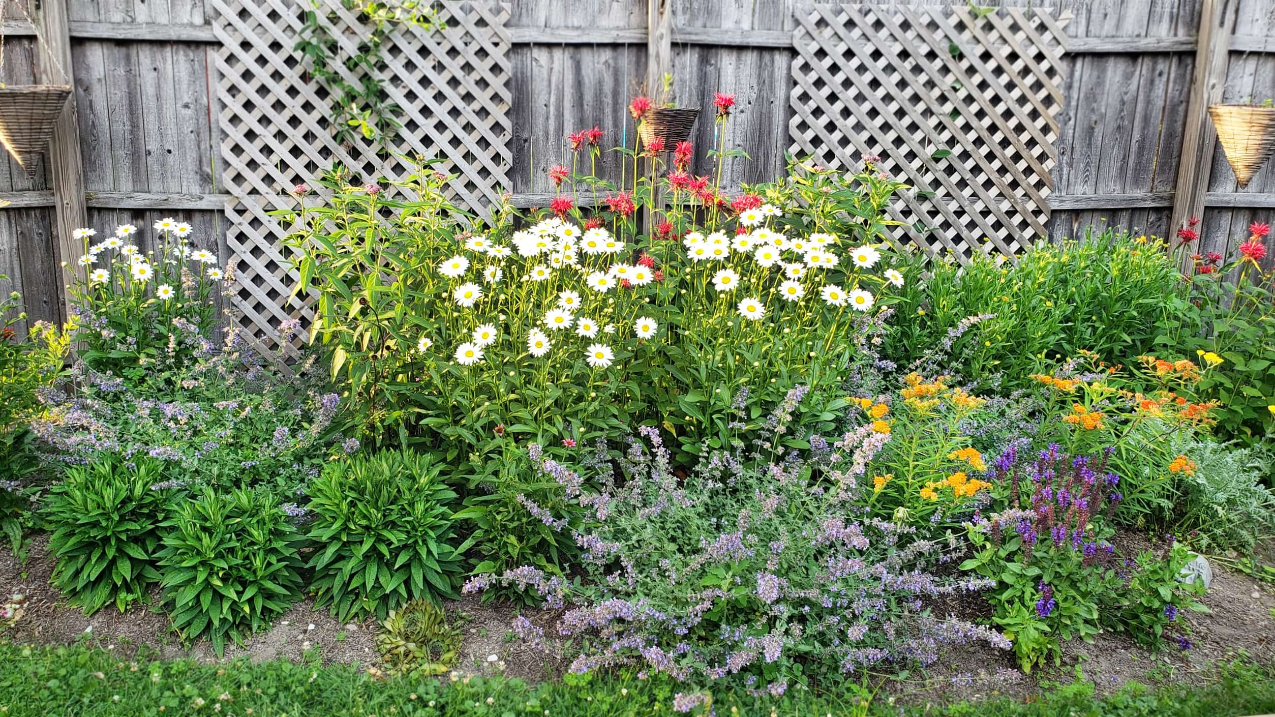 Pre-Planned Garden: Late June In The Second Season
