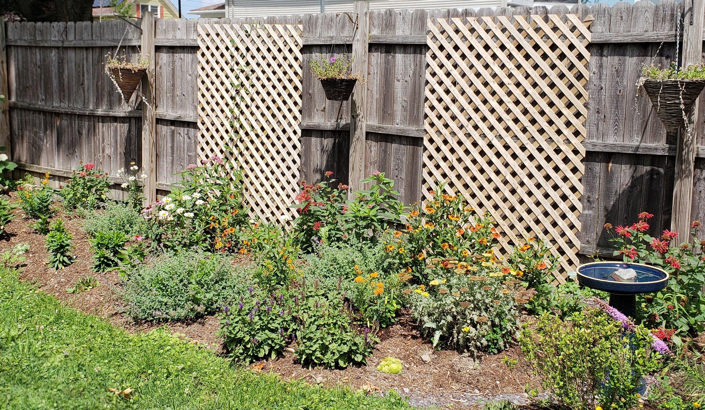 Pre-Planned Garden: Growth in June
