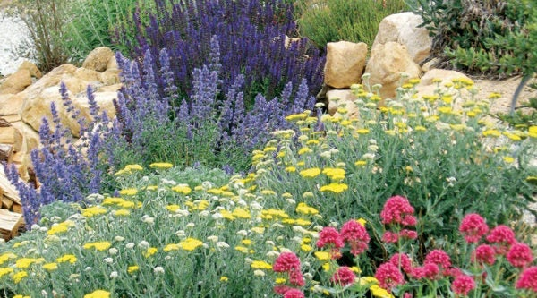 An alternative to the Summer Showstopper is the Jumbo Waterwise Pre-Planned Garden, our most popular garden of all time.