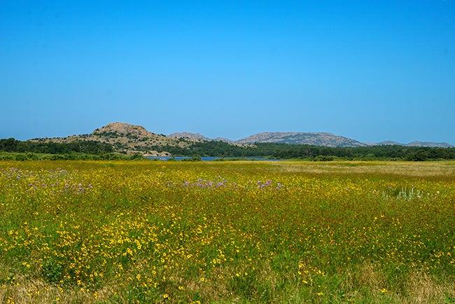 Meadow & Blue Sky By Leslie Miller