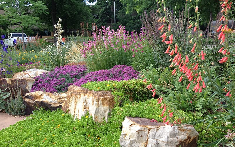 Xeriscaping High Country Gardens