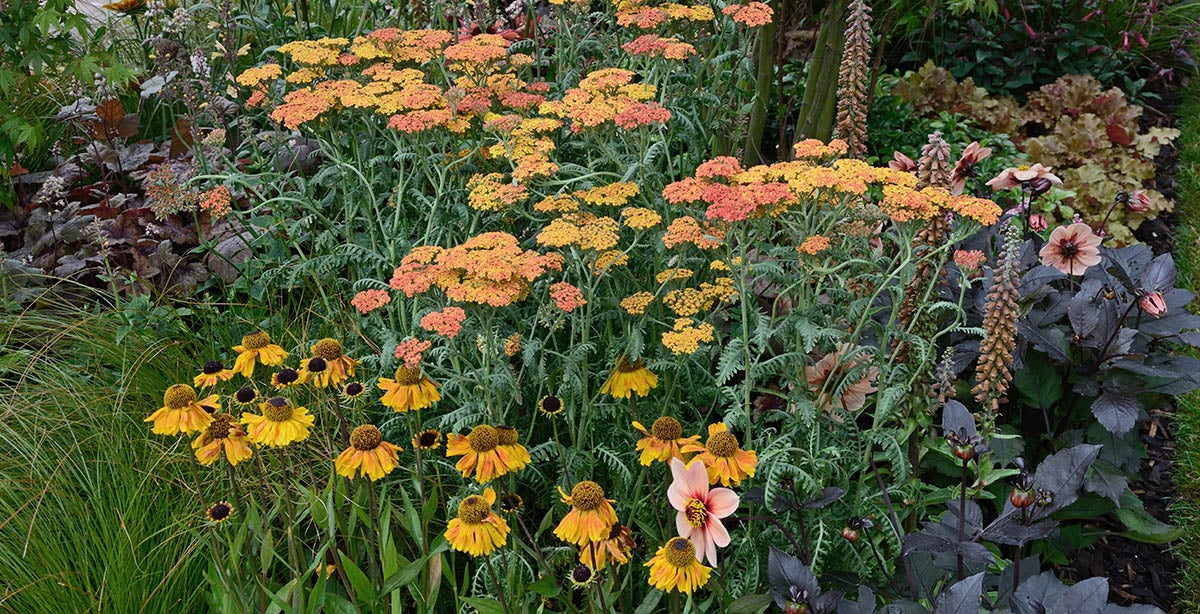 Perennial Plant Care In Seasons One Two High Country Gardens
