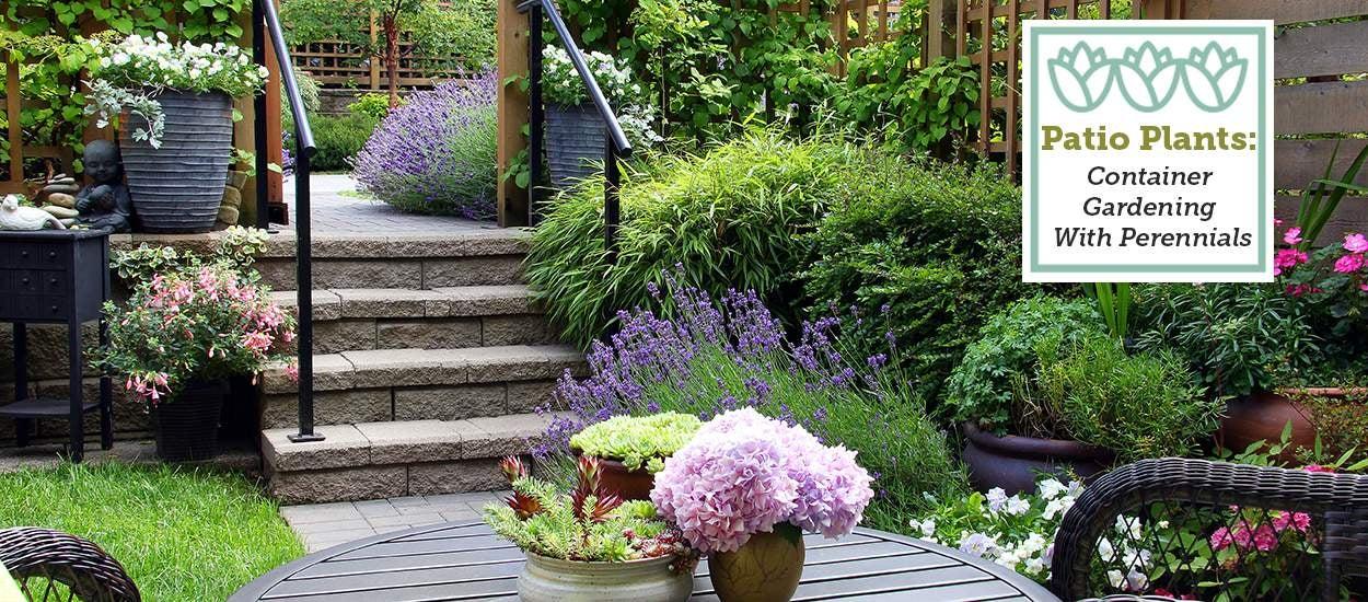 patio-garden-container