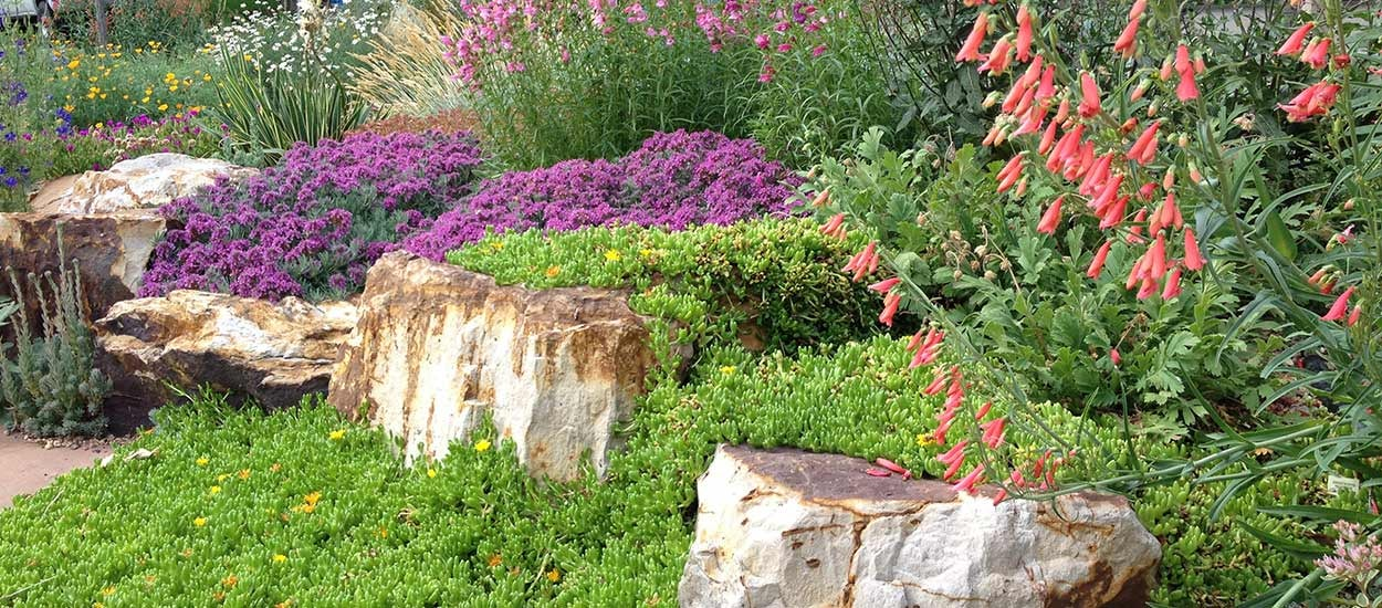 After: Creeping Grey Germander (Teucrium aroanium) with multiple varieties of Penstemon, Salvia and Ice Plant.