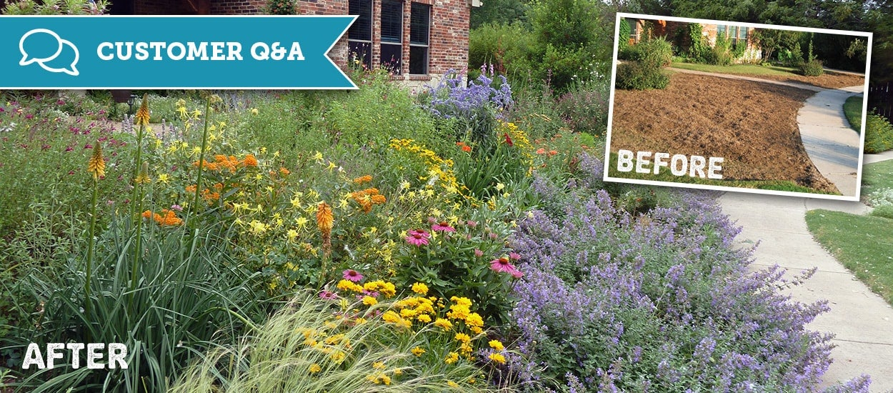Gardening In Dallas Texas With Drought Tolerant Native Plants
