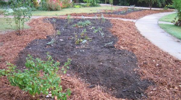 Rajesh J.'s freshly planted garden.