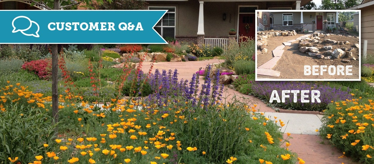 native drought resistant xeric garden
