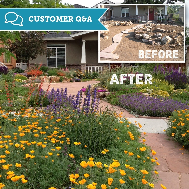 Drought Tolerant Front Yard: Creating A Drought-Resistant Garden